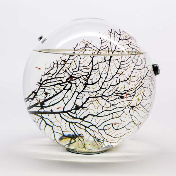 Sealed decorative acquarium Beachworld - Gorgonia Spherical 30 cm