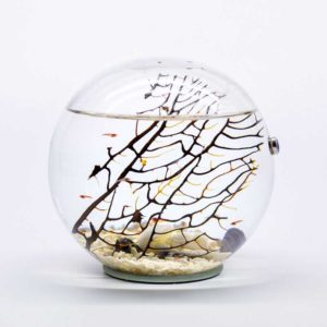 Beachworld gorgonia spherical aquarium