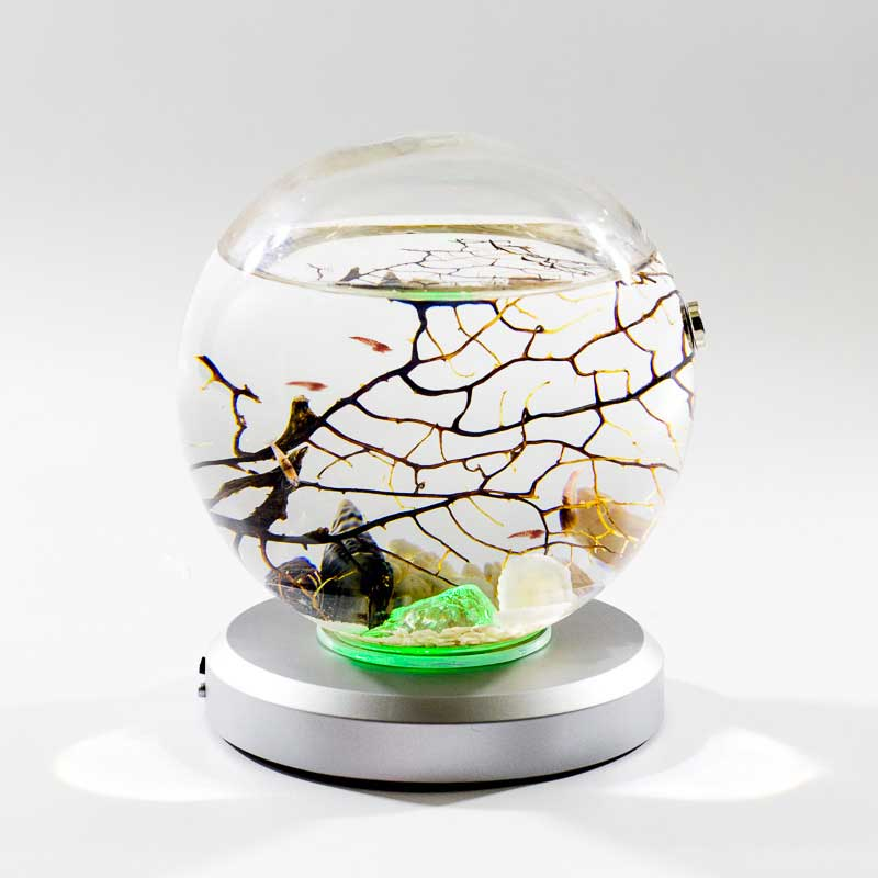 Beachworld aquarium Gorgonia Spherical 15 cm