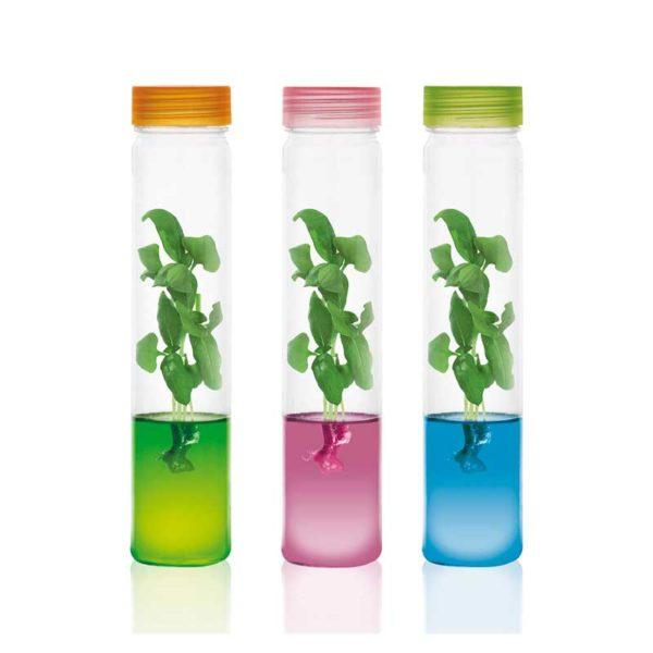 Plants grow in gel Plantarium