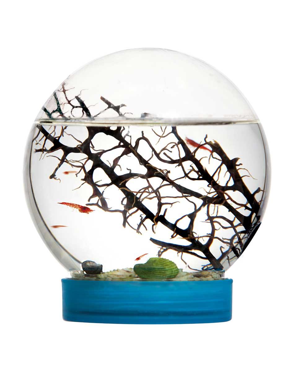 Ecosistema acquatico in miniatura