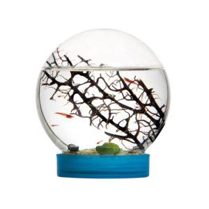 e vivo mini ecosystem aquarium in miniature educational