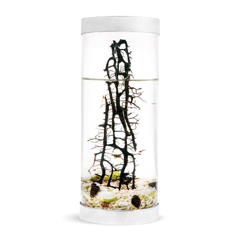 Beachworld Limited Edition Acquarium