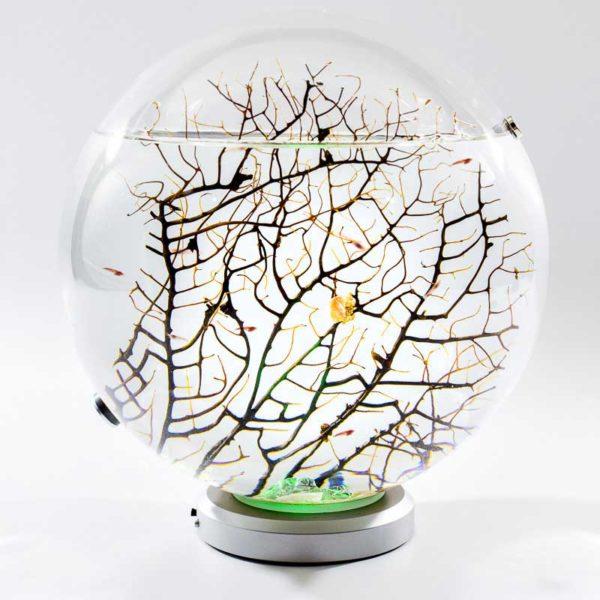Beachworld sphere acquarium