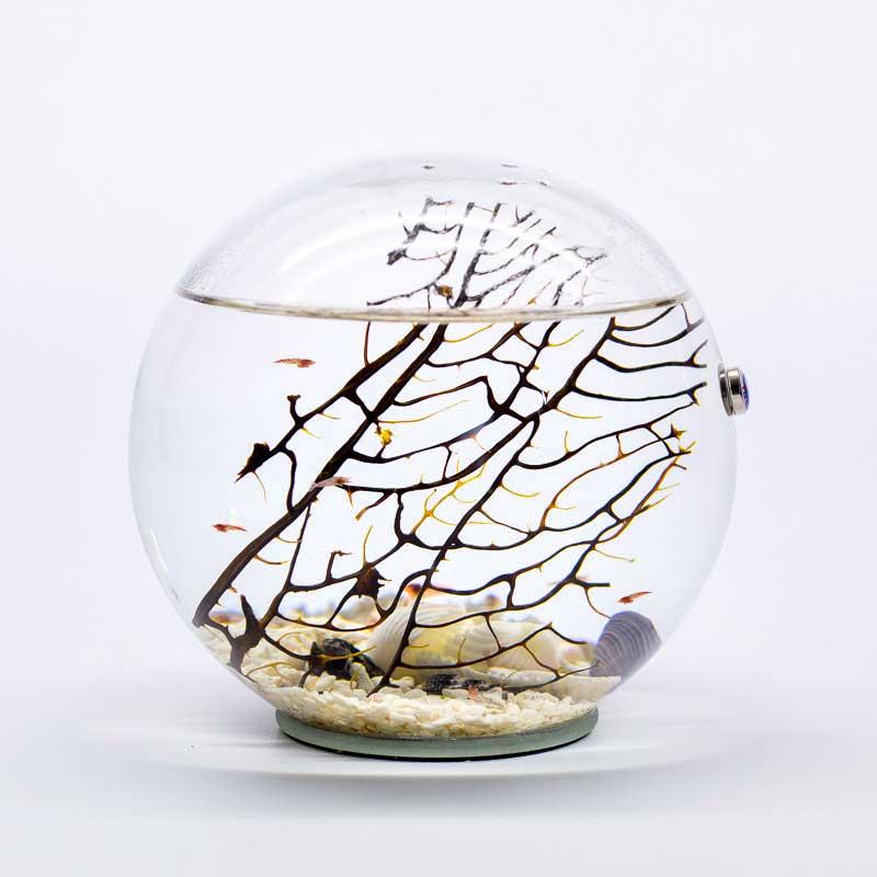 Beachworld gorgonia spherical aquarium