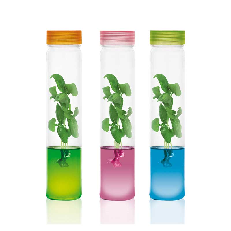 Plants grow in gel Plantarium pet