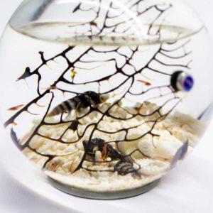 Beachworld miniature biospheres
