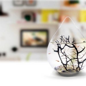 Beachworld biospheres in Miniature